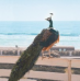 """""""Il paradiso del pavone"""", concluse le riprese del film con Dominique Sanda, Alba Rohrwacher, Maya Sansa e Fabrizio Ferracane"""